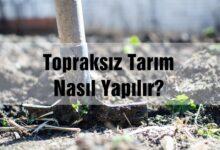 topraksız tarım nasıl yapılır?